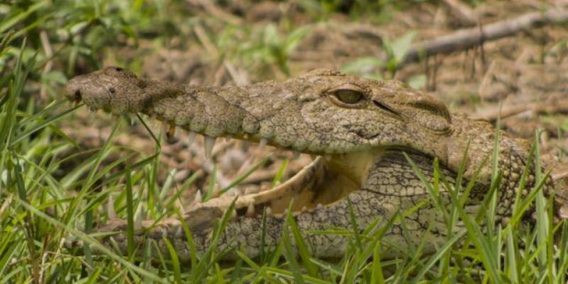 Zuidafrika Wildlife fotografie croc