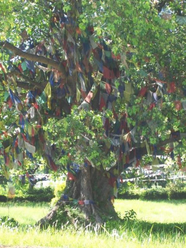 vrijwilligerswerk in Nepal Boom met gebedsvlaggetjes