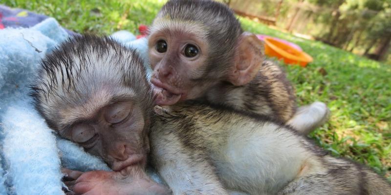 Monkey Rehab Arlette 1