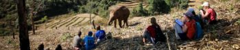 Olifantenproject Thailand header