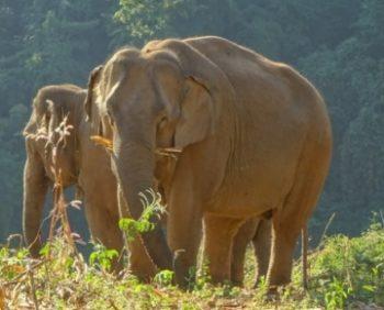Olifantenproject Thailand tegel