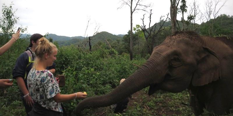 Thailand Olifantenproject bananen voeren