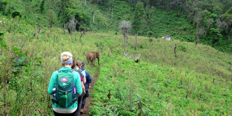 Thailand Olifantenproject bushwalk naar olifanten