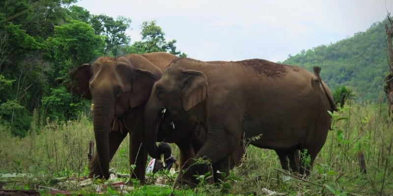 Thailand Olifantenproject evenbijkletsen