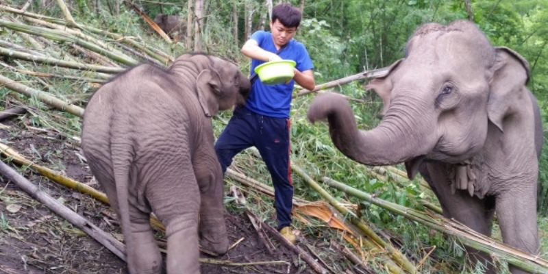 Thailand Olifantenproject olifant met verzorger