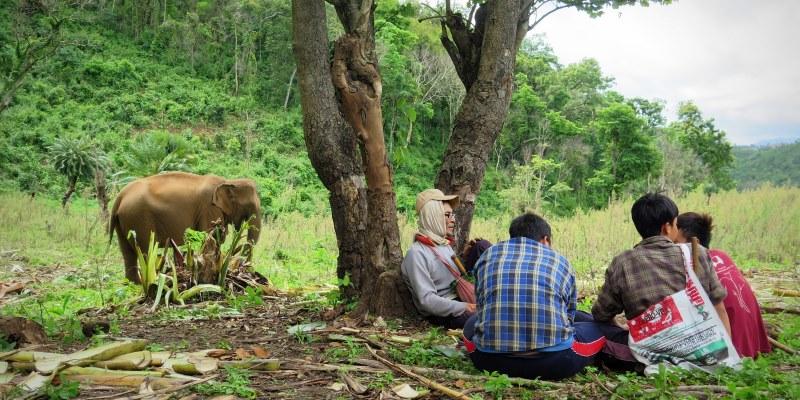Thailand Olifantenproject olifantenmahouts