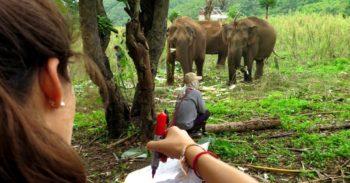 Thailand Olifantenproject onderzoek naar welbevinden foto Lidy