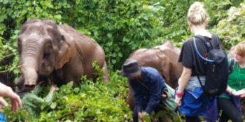 Thailand Olifantenproject onderzoekdoen