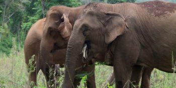 Thailand Olifantenproject theekransje