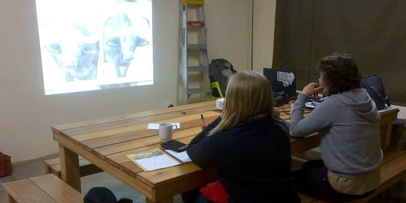 Welgevonden Lisette het maken van de identificatiekit van een kudde buffels