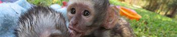 Zuid-Afrika Monkey Rehab Center baby aapjes