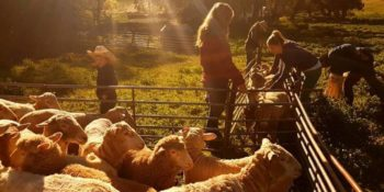 Lecondfiels Farm Steef en Lisan 4