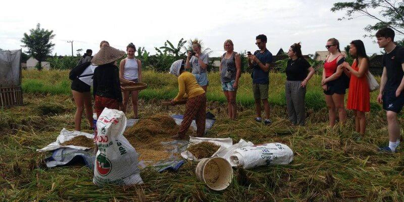 Bali vrijwilligerswerk en cultuur 2
