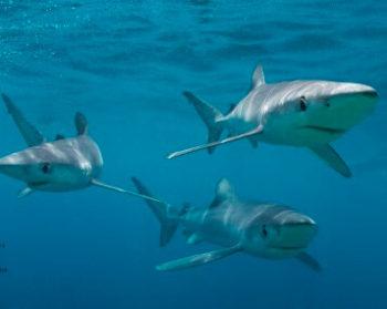 Zuid-Afrika Marine Conservation Gansbaai