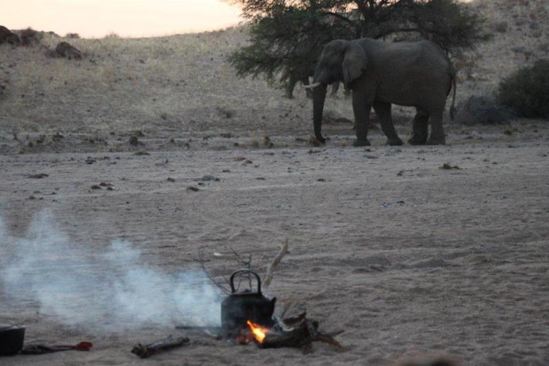 Namibia Expedition olifant bij basiskamp