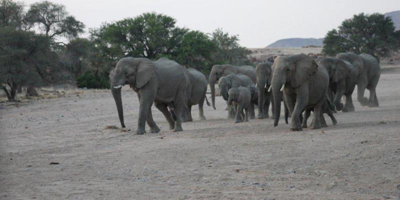 Namibia Expedition olifanten nabij basiskamp