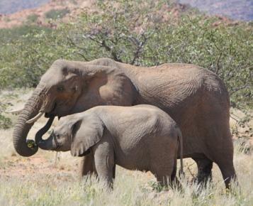 Olifantenproject Namibie
