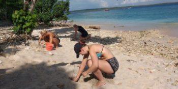 Vrijwilligerswerk op Bali schildpaddenproject