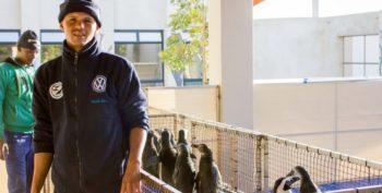 Zuid-Afrika Marine Conservation Gansbaai pinguin opvancentrum