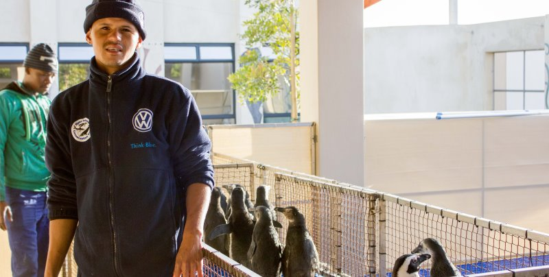 Zuid-Afrika Marine Conservation Gansbaai pinguin opvancentrum