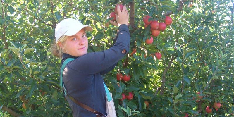 Australië appels plukken