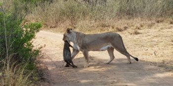 Zuid-Afrika Welgevonden Conservation and Research Daan
