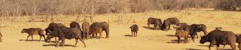 Zuid-Afrika Welgevonden Conservation and Research Daan van Dee