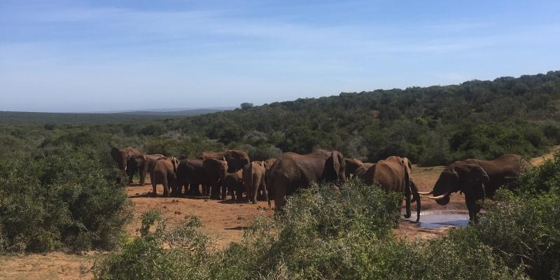 Zuid-Afrika reisverslag Yvette Addo Park