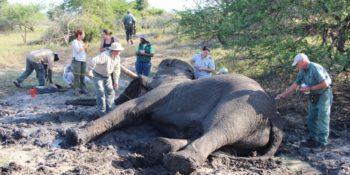 Zuid-Afrika Kwazulu Big 5 reservaten reisverhaal Martin Tembe Elephant Park