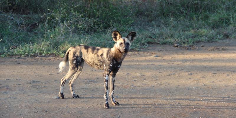 Zuid-Afrika Kwazulu Big 5 reservaten reisverhaal Martin in Hluhluwe park