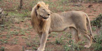 Zuid-Afrika Kwazulu Big 5 reservaten reisverhaal Martin in Mkuze park