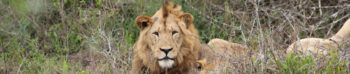 Zuid-Afrika reisverhaal Kwazulu Natal Big 5 project Martin