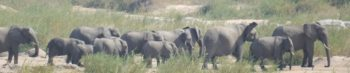 Vrijwilligerswerk met dieren in het buitenland