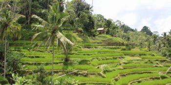 Bali Anouk rijstveld 2
