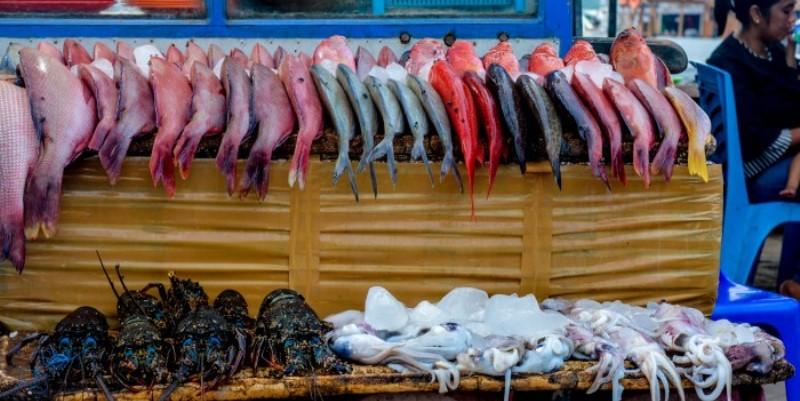 Indonesie vrijwilligerswerk op Flores vers gevangen vis in de haven