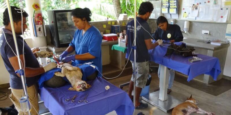 Sri Lanka Dog Care Project 7