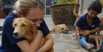 Sri Lanka Dog Care Project 9