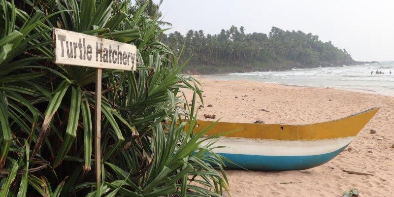 Sri Lanka schildpaddenproject 2