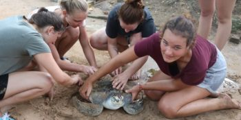 Sri Lanka schildpaddenproject 4