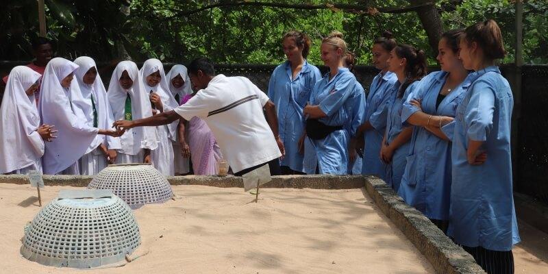 Sri Lanka schildpaddenproject 5