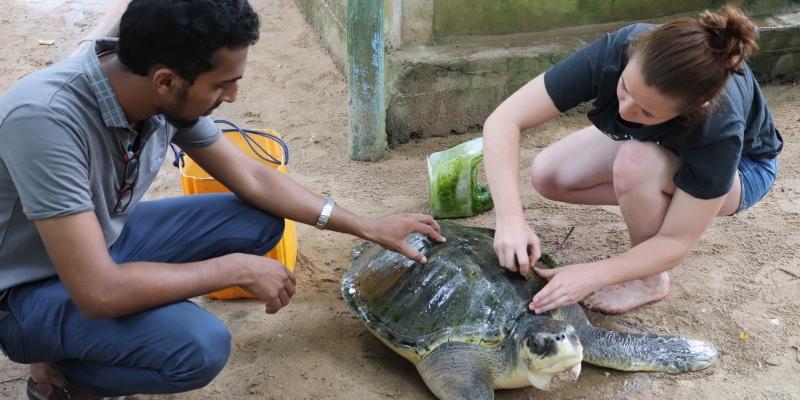 Sri Lanka schildpaddenproject