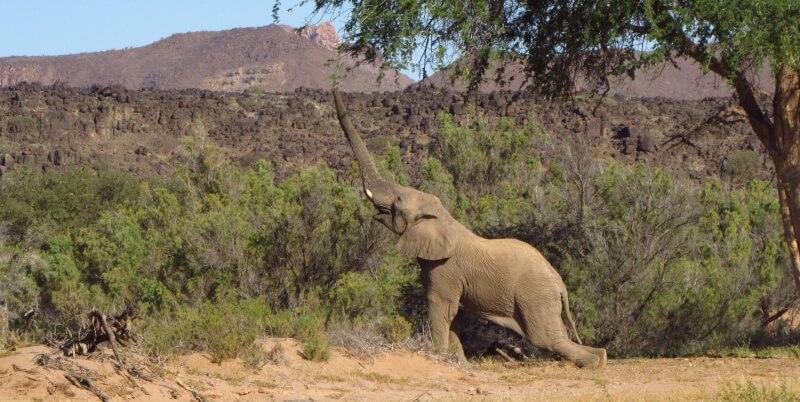 Namibie olifantenproject Patrol week 12