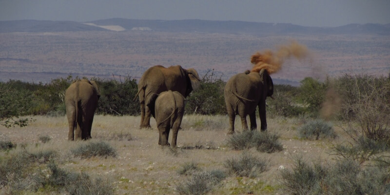 Namibie olifantenproject Patrol week 2