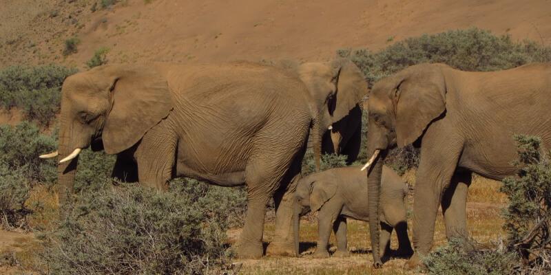 Namibie olifantenproject Patrol week 9