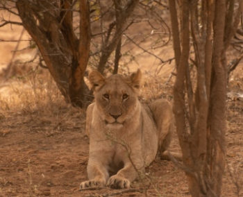 Zuid-Afrika Kruger Research and Conservartion Dieren in the bush 2