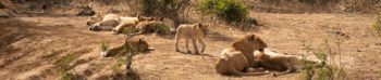 Zuid-Afrika Kruger Research and Conservartion Dieren in the bush 3