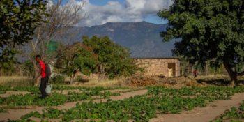 Zuid-Afrika Kruger Research and Conservartion Dieren in the bush buffel De Groentetuin