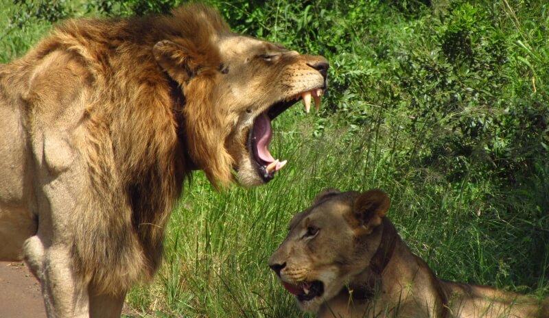 Zuid-Afrika Kwazulu Big 5 Hluhluwe 9