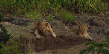 Zuid-Afrika Kwazulu Big 5 Manyoni 4