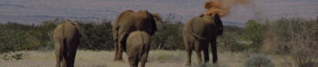 Olifanten in Nambie
